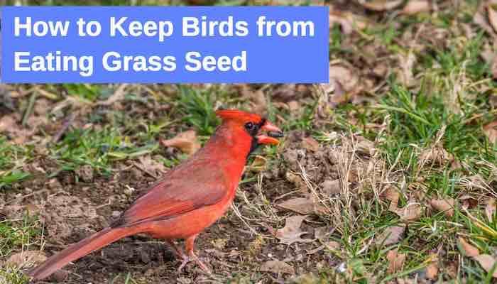 bird-seed-home