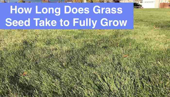 grass-fully-grow