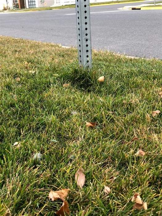 Any of the trimmers on this page would make short order of the overgrown grass around this street sign post.